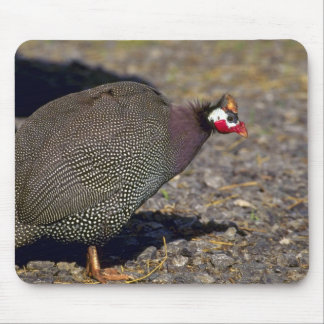 Aves de Guinea Alfombrilla De Ratones