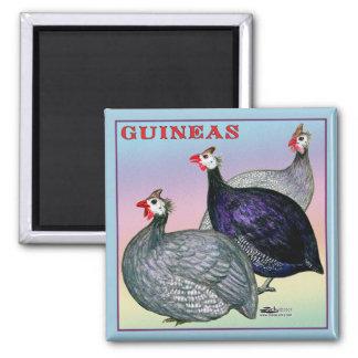 Aves de Guinea tres Imán Cuadrado