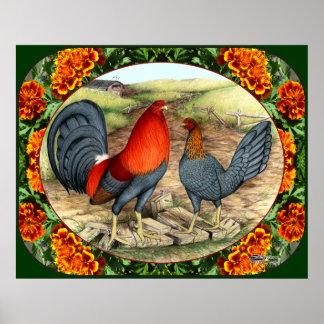 Aves de juego hermosas póster