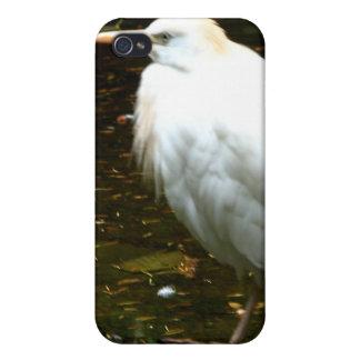 Aves del agua iPhone 4/4S funda