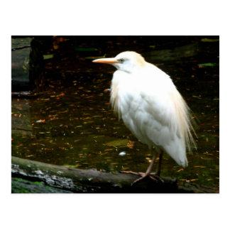 Aves del agua postal
