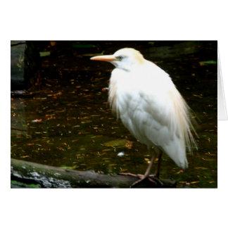 Aves del agua tarjeta de felicitación
