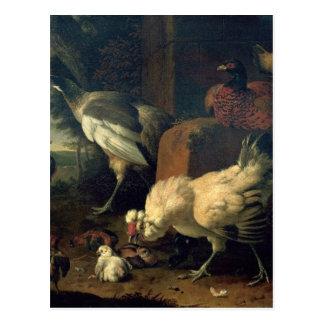 Aves nacionales con un faisán y los pavos reales postales