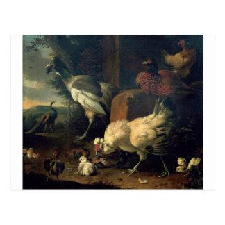 Aves nacionales con un faisán y los pavos reales tarjeta postal