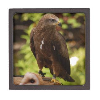 Aves rapaces cajas de joyas de calidad