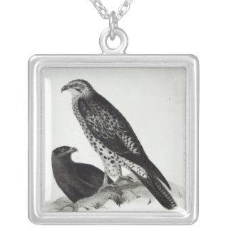 Aves rapaces colgante cuadrado