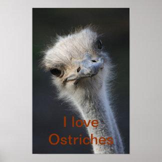 avestruces póster