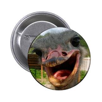 Avestruz cuál está encima de botón