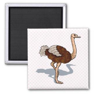 Avestruz de Olaf Imanes Para Frigoríficos