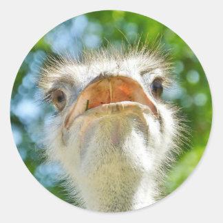 Avestruz divertida - pegatina