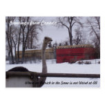Avestruz en la nieve tarjetas postales