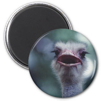 avestruz iman de nevera
