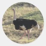 Avestruz Pegatina Redonda