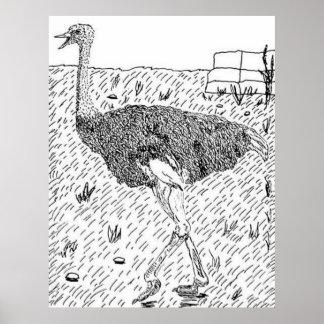 Avestruz siria póster