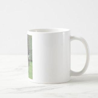 Avestruz Tazas De Café