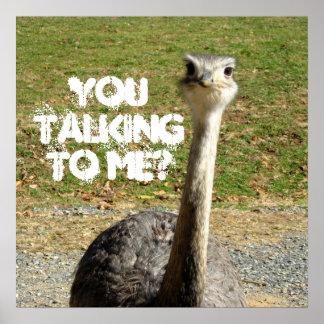 ¿Avestruz usted que habla conmigo? Póster