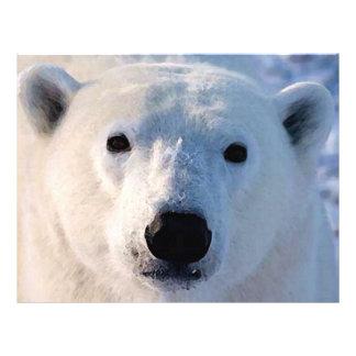 """Aviador del oso polar folleto 8.5"""" x 11"""""""