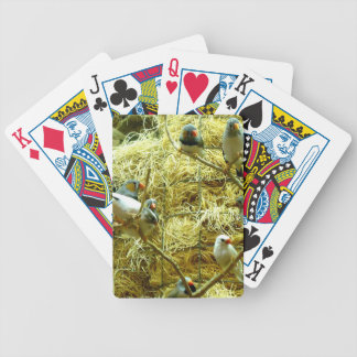 Aviary Enclosure Canaries Up-Close Bicycle Playing Cards