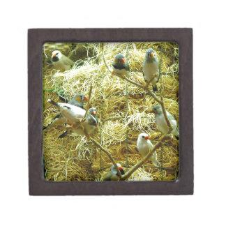 Aviary Enclosure Canaries Up-Close Keepsake Box