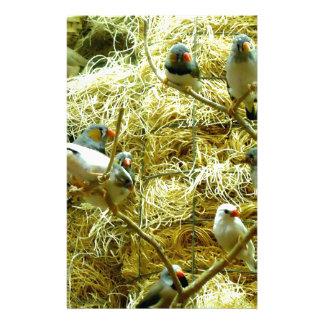 Aviary Enclosure Canaries Up-Close Stationery