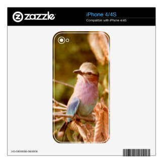 Aviary Skin For The iPhone 4S