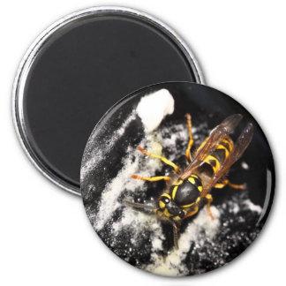 Avispa en el hielo imán redondo 5 cm