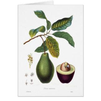Avocado (Persea americana) Card