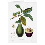 Avocado (Persea americana) Greeting Cards