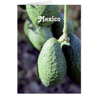 Avocado Stationery Note Card