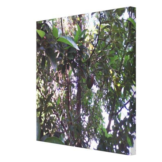 Avocado Tree Canvas Print