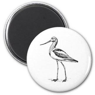 Avocet Bird Drawing Fridge Magnet
