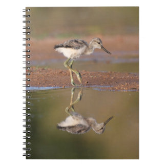Avocet chick notebook