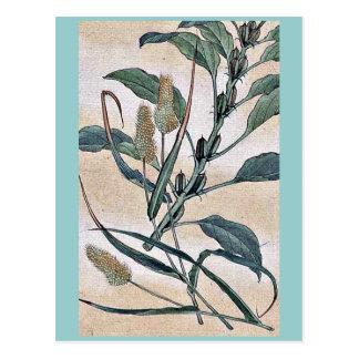 Awa - goma / Kanemori Ukiyo-e. Postcards