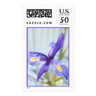 Awaken Iris Photo Stamp