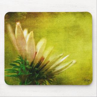 Awakening Coneflower Echinacea Blossom Mouse Pad