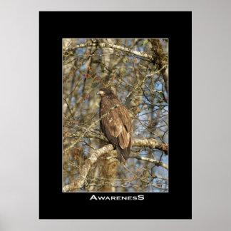 AWARENESS Eagle Photo Poster