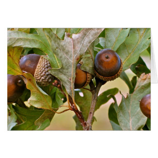 Awesome Acorns Greeting Card