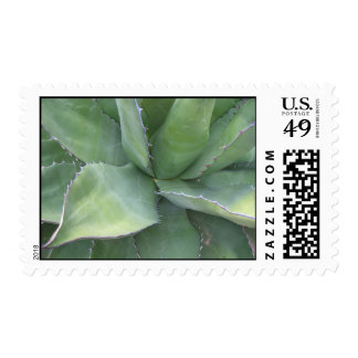 Awesome Agave (2) Postage Stramps