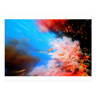 Awesome Aquarium Ocean Coral Design Postcard