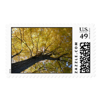 'Awesome Autumn' Postage