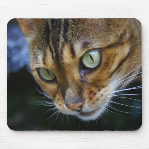 Awesome Bengal Cat Mousepads