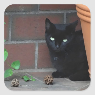 Awesome Black Cat behind Flower Pot Square Sticker