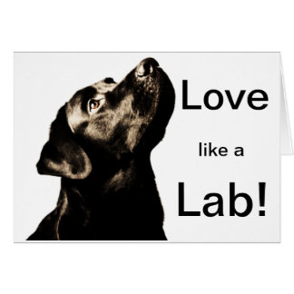 Awesome Black Labrador Retriever Card