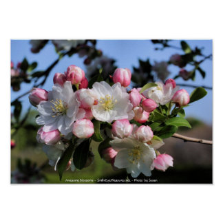 Awesome Blossoms Flower Photography Poster Print