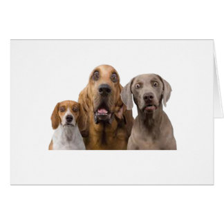 awesome dogs designs card