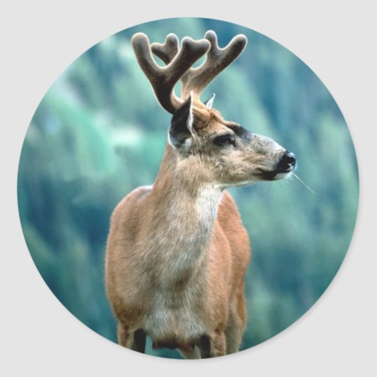 Awesome Elk Classic Round Sticker