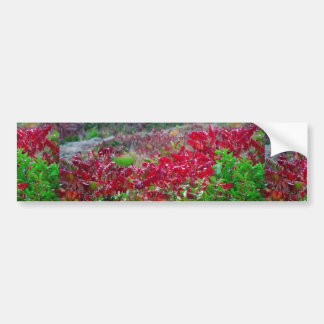 Awesome Fall Red Leaf Flower Colors on gifts fun Bumper Sticker