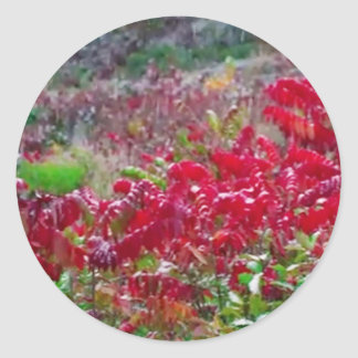 Awesome Fall Red Leaf Flower Colors on gifts fun Classic Round Sticker
