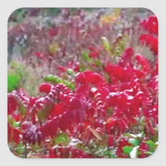 Awesome Fall Red Leaf Flower Colors on gifts fun Square Sticker