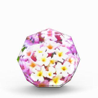Awesome Garden Flowers Photo Design Image Awards